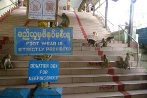 Expect to see these signs everywhere in Myanmar (minus the monkeys)
